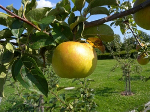 fruit in the garden of eden